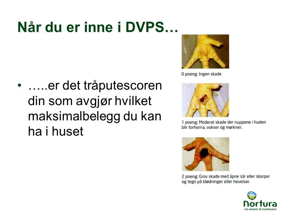 Når du er inne i DVPS… …..er det tråputescoren din som avgjør hvilket maksimalbelegg du kan ha i huset.