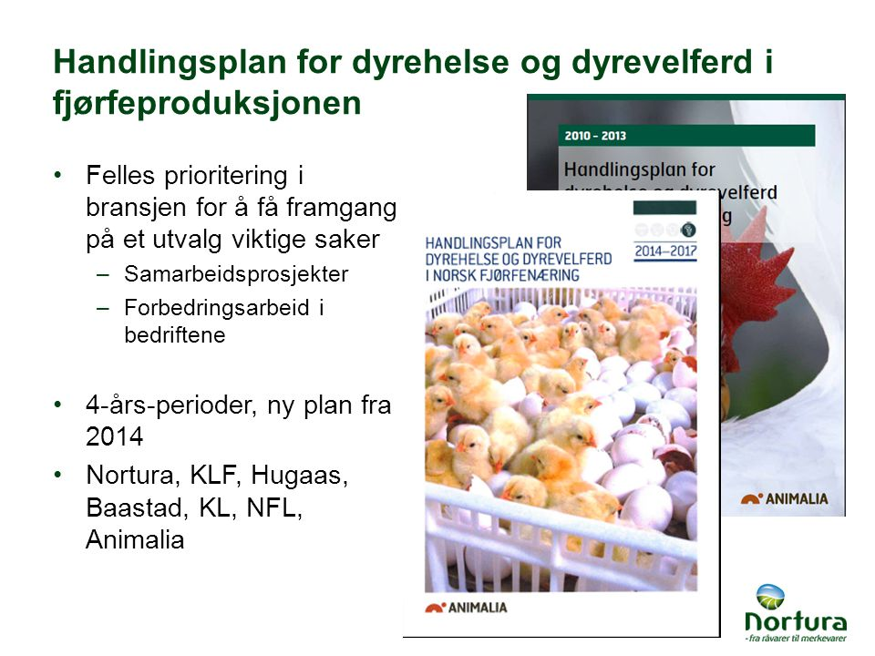 Handlingsplan for dyrehelse og dyrevelferd i fjørfeproduksjonen