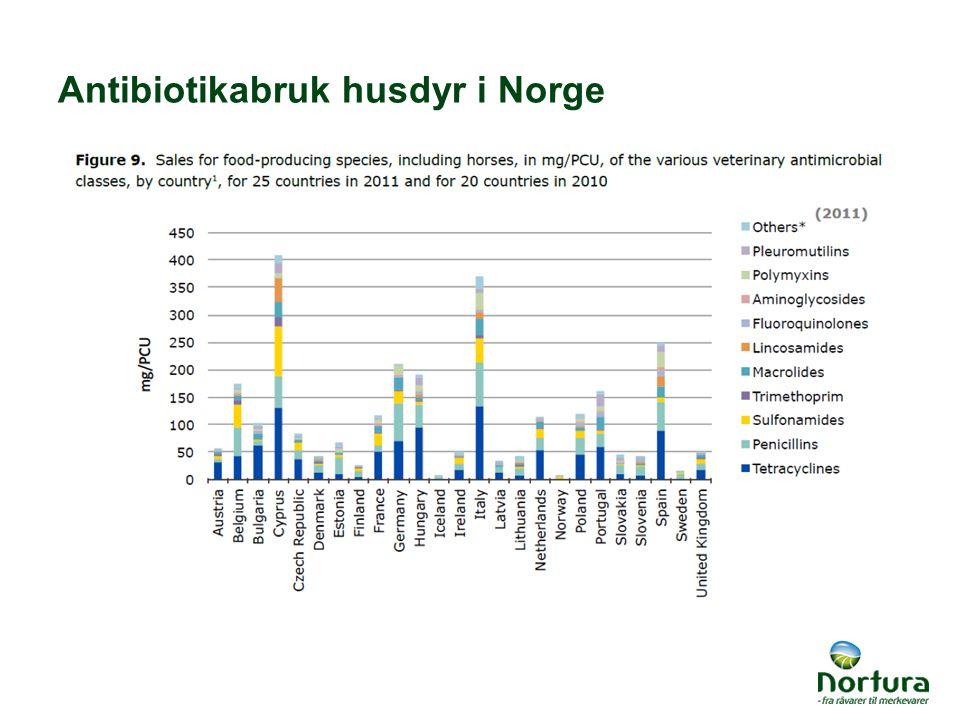 Antibiotikabruk husdyr i Norge
