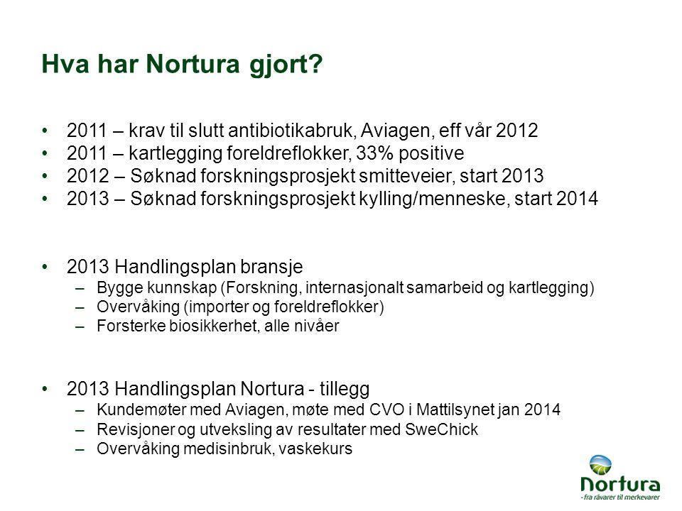 Hva har Nortura gjort 2011 – krav til slutt antibiotikabruk, Aviagen, eff vår 2012. 2011 – kartlegging foreldreflokker, 33% positive.