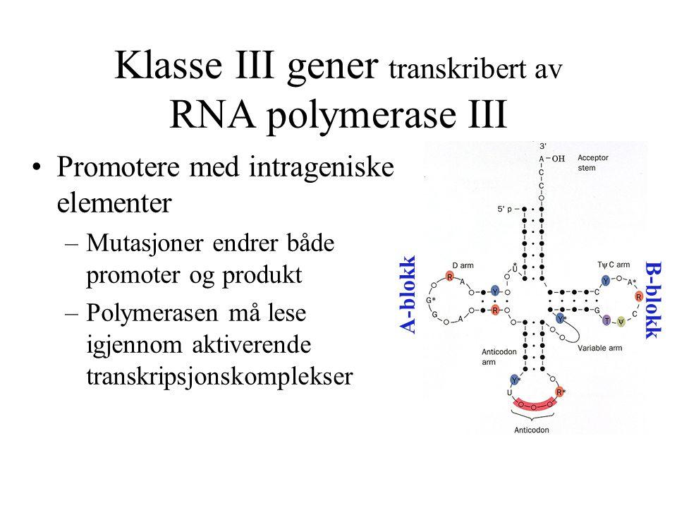 Klasse III gener transkribert av RNA polymerase III