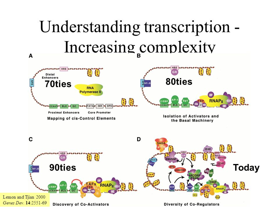 Understanding transcription - Increasing complexity