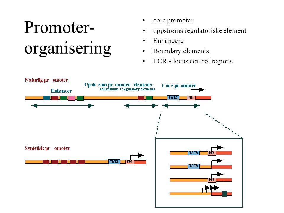 Promoter- organisering