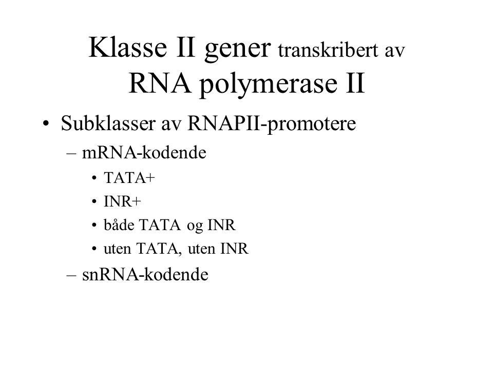Klasse II gener transkribert av RNA polymerase II