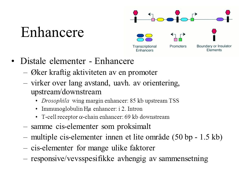 Enhancere Distale elementer - Enhancere