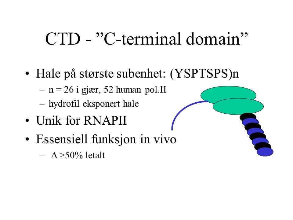 CTD - C-terminal domain