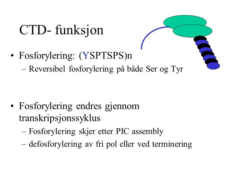 CTD- funksjon Fosforylering: (YSPTSPS)n