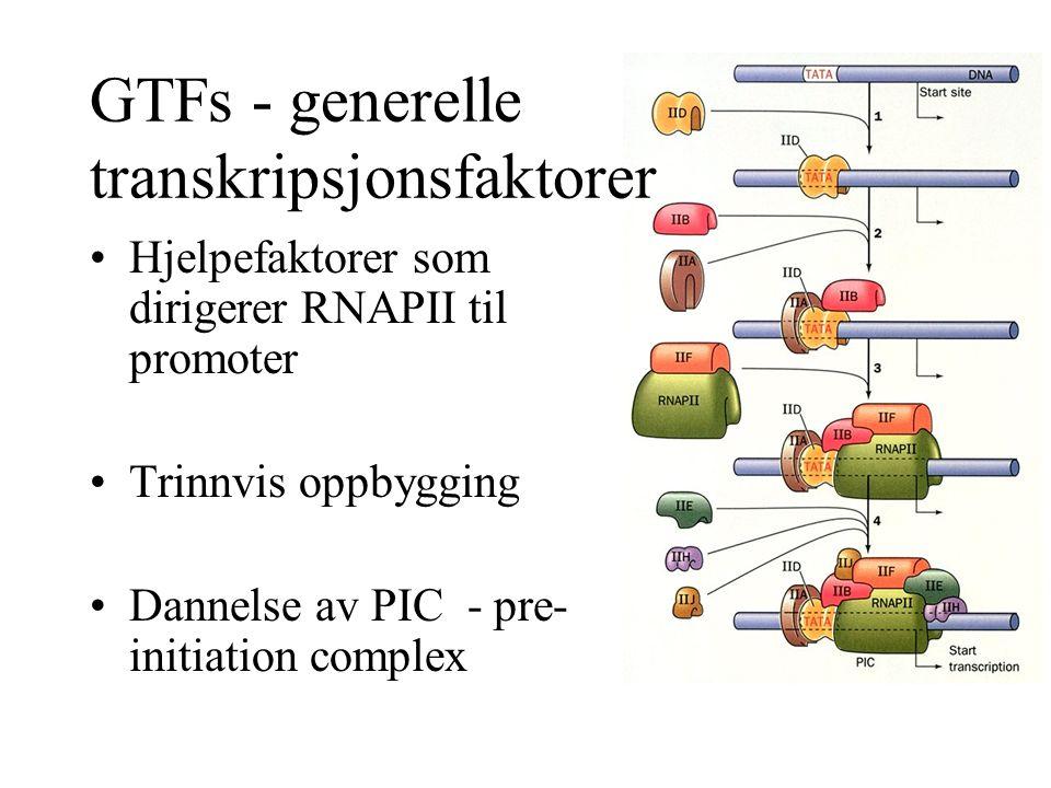 GTFs - generelle transkripsjonsfaktorer