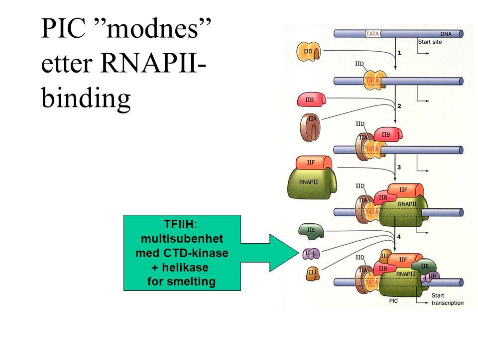 PIC modnes etter RNAPII- binding