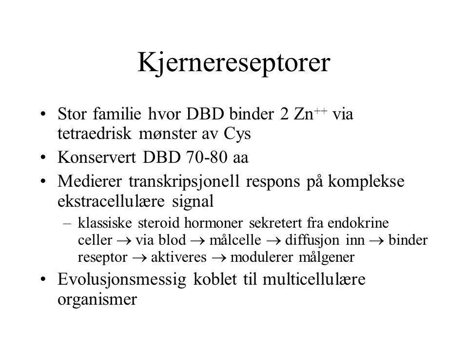 Kjernereseptorer Stor familie hvor DBD binder 2 Zn++ via tetraedrisk mønster av Cys. Konservert DBD 70-80 aa.