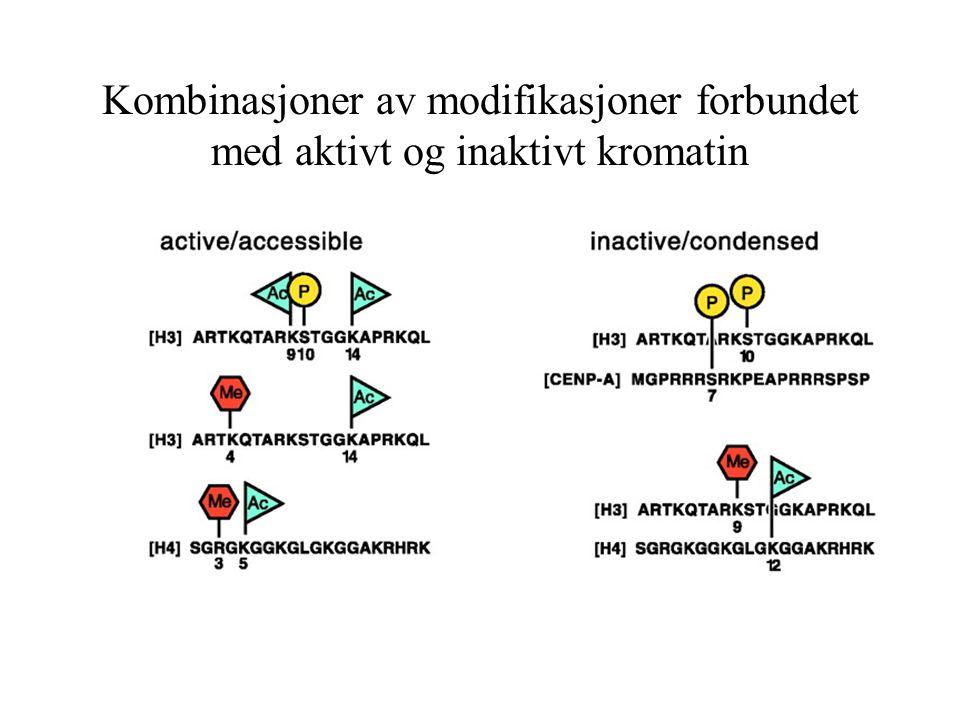 Kombinasjoner av modifikasjoner forbundet med aktivt og inaktivt kromatin