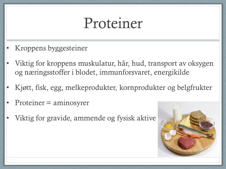 Proteiner Kroppens byggesteiner