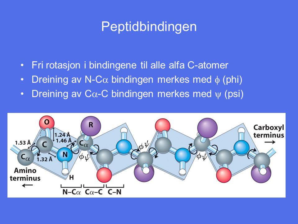 Peptidbindingen Fri rotasjon i bindingene til alle alfa C-atomer