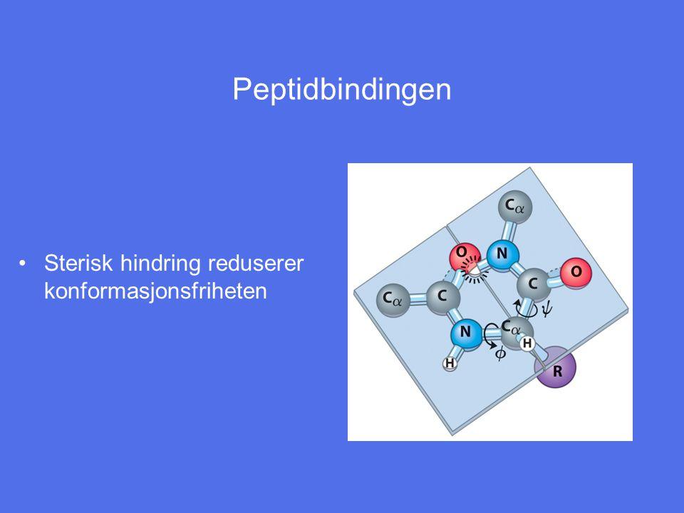 Peptidbindingen Sterisk hindring reduserer konformasjonsfriheten