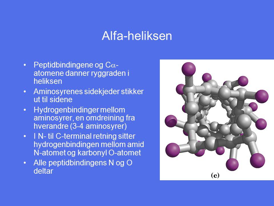 Alfa-heliksen Peptidbindingene og Ca-atomene danner ryggraden i heliksen. Aminosyrenes sidekjeder stikker ut til sidene.