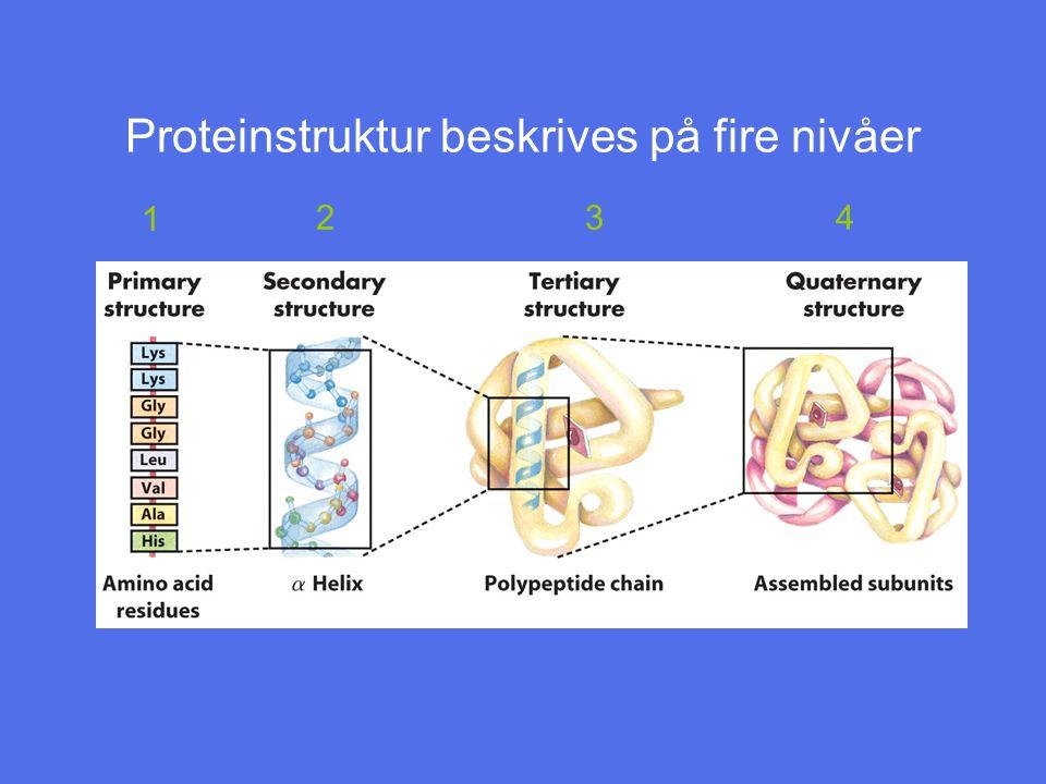 Proteinstruktur beskrives på fire nivåer