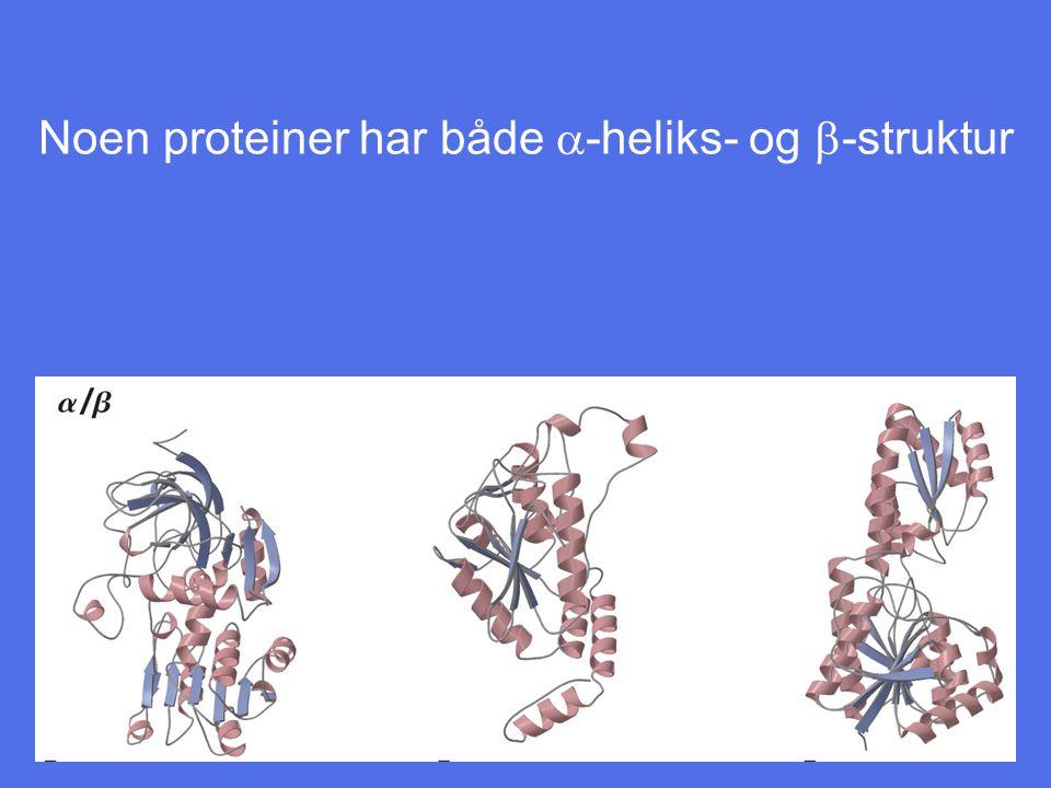 Noen proteiner har både a-heliks- og b-struktur