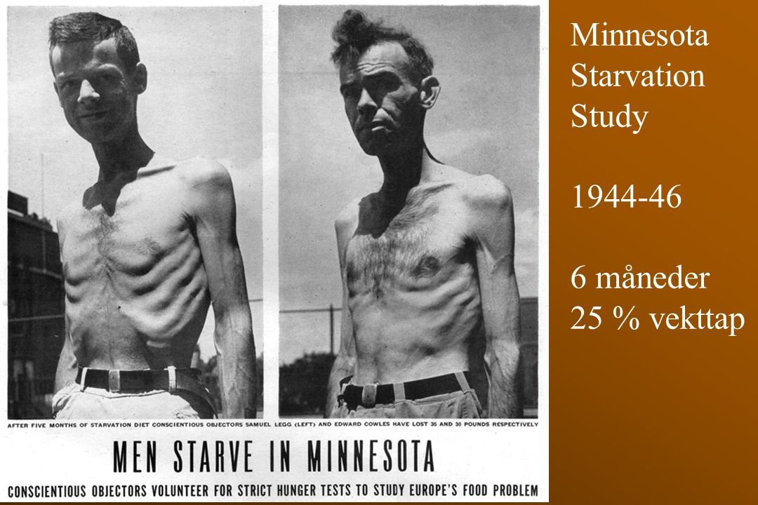 Minnesota Starvation Study 1944-46 6 måneder 25 % vekttap