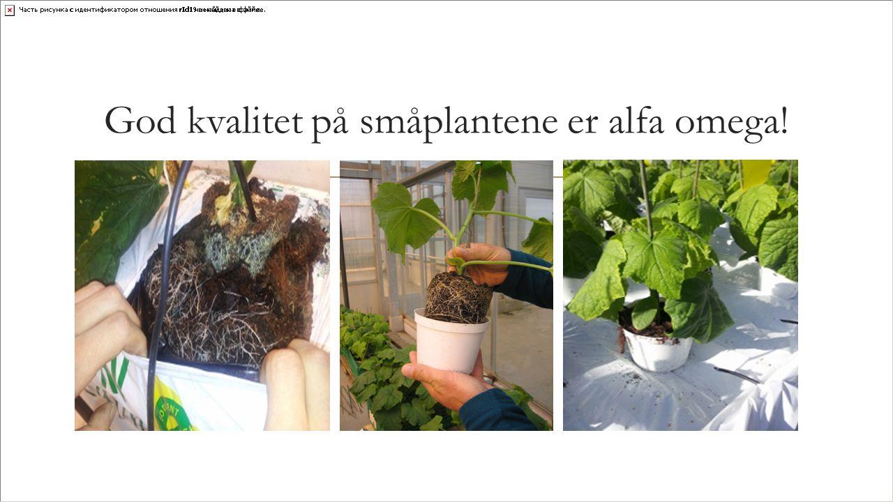 God kvalitet på småplantene er alfa omega!