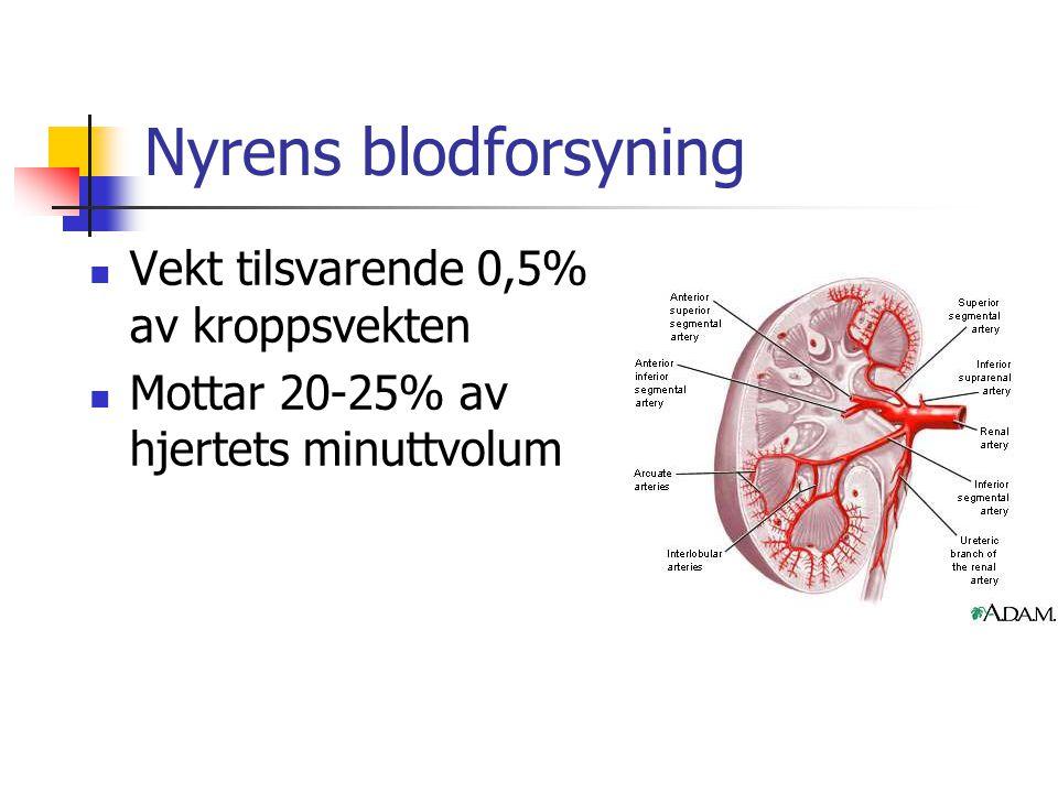 Nyrens blodforsyning Vekt tilsvarende 0,5% av kroppsvekten
