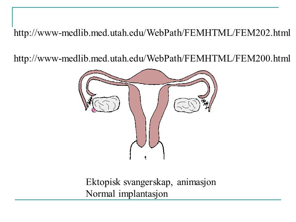 Ektopisk svangerskap, animasjon Normal implantasjon
