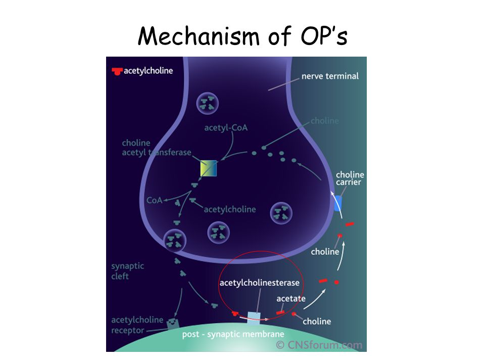 Mechanism of OP's 26