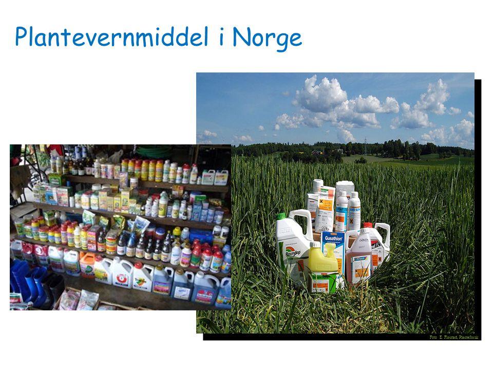 Plantevernmiddel i Norge
