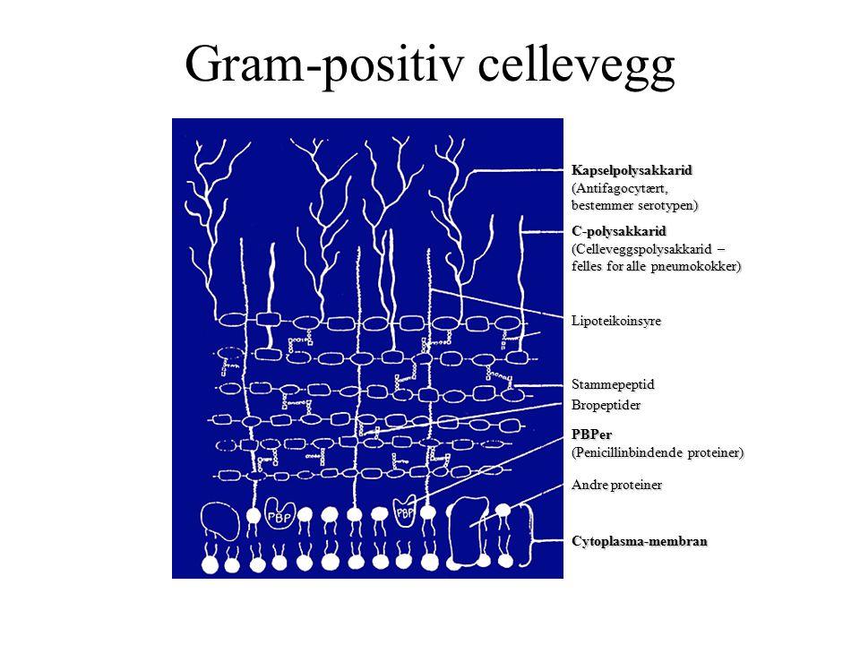 Gram-positiv cellevegg