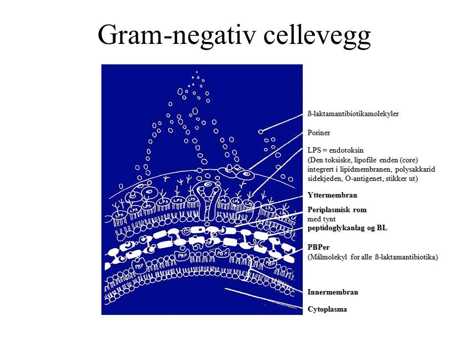 Gram-negativ cellevegg