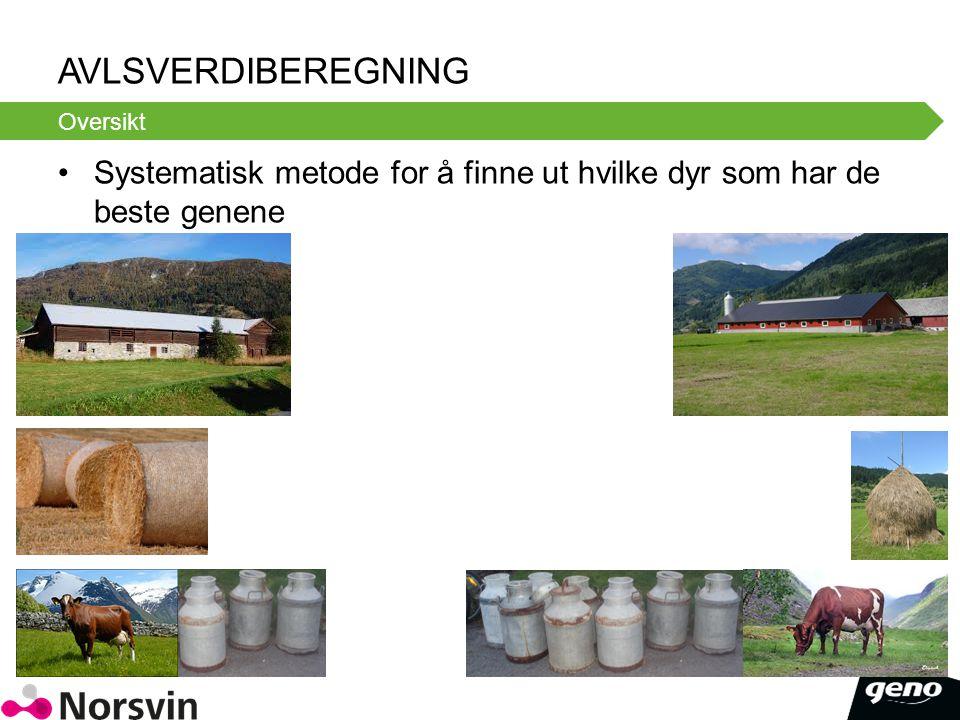 Avlsverdiberegning Oversikt. Systematisk metode for å finne ut hvilke dyr som har de beste genene.