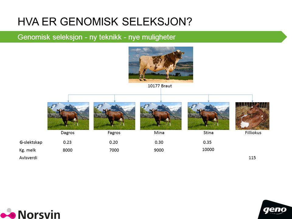 HvA er Genomisk Seleksjon