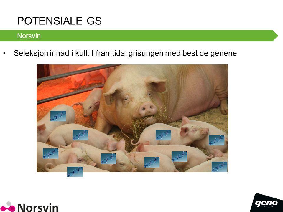 Potensiale GS Norsvin. Seleksjon innad i kull: I framtida: grisungen med best de genene.
