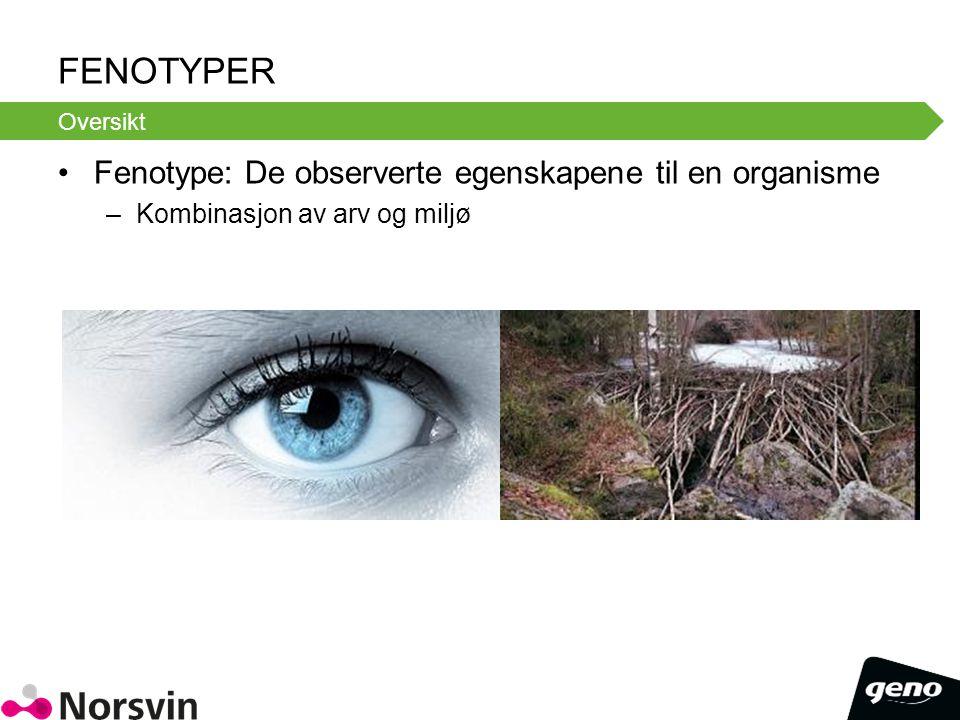 Fenotyper Fenotype: De observerte egenskapene til en organisme