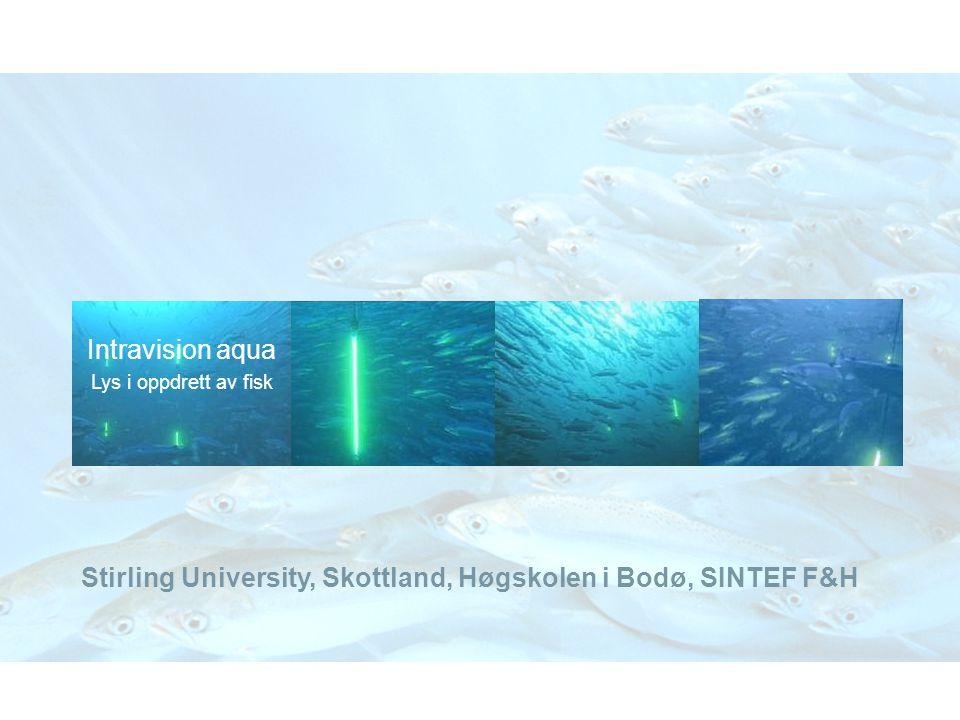 Stirling University, Skottland, Høgskolen i Bodø, SINTEF F&H
