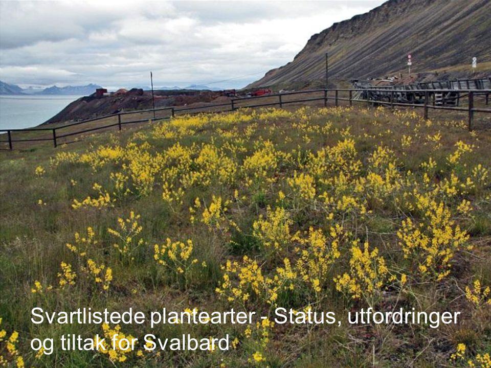 Svartlistede plantearter - Status, utfordringer og tiltak for Svalbard