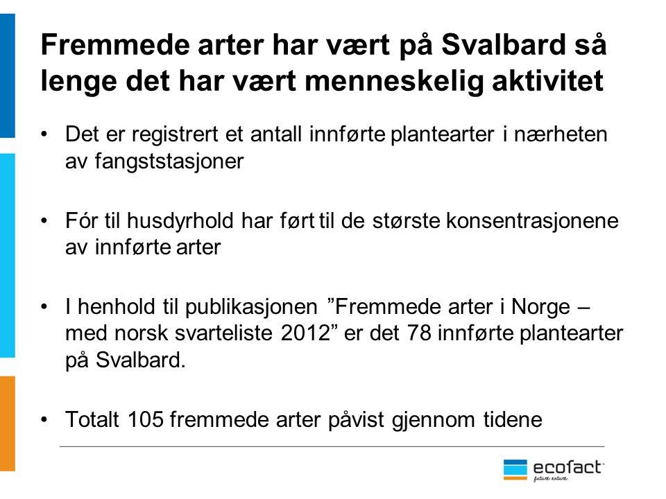 Fremmede arter har vært på Svalbard så lenge det har vært menneskelig aktivitet
