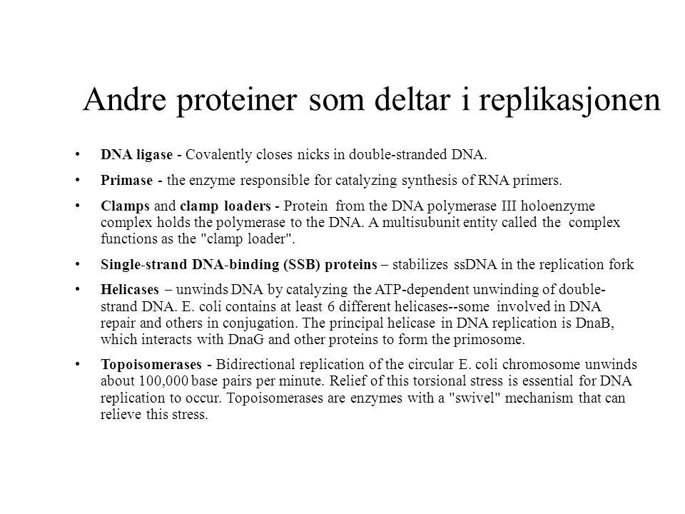 Andre proteiner som deltar i replikasjonen