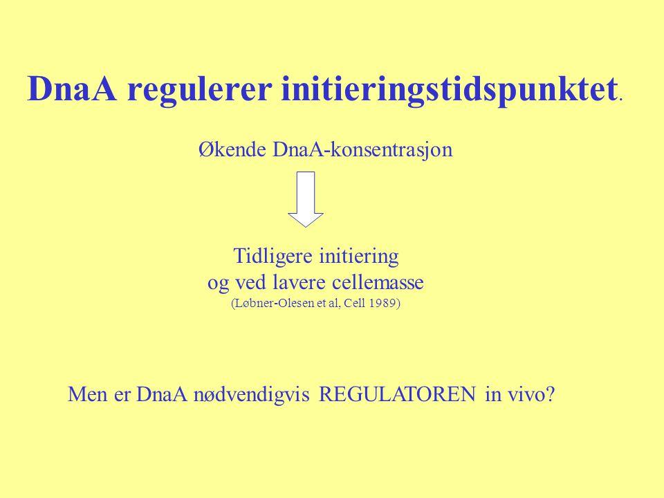 DnaA regulerer initieringstidspunktet.