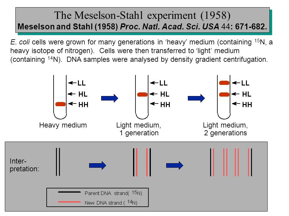 The Meselson-Stahl experiment (1958) Meselson and Stahl (1958) Proc