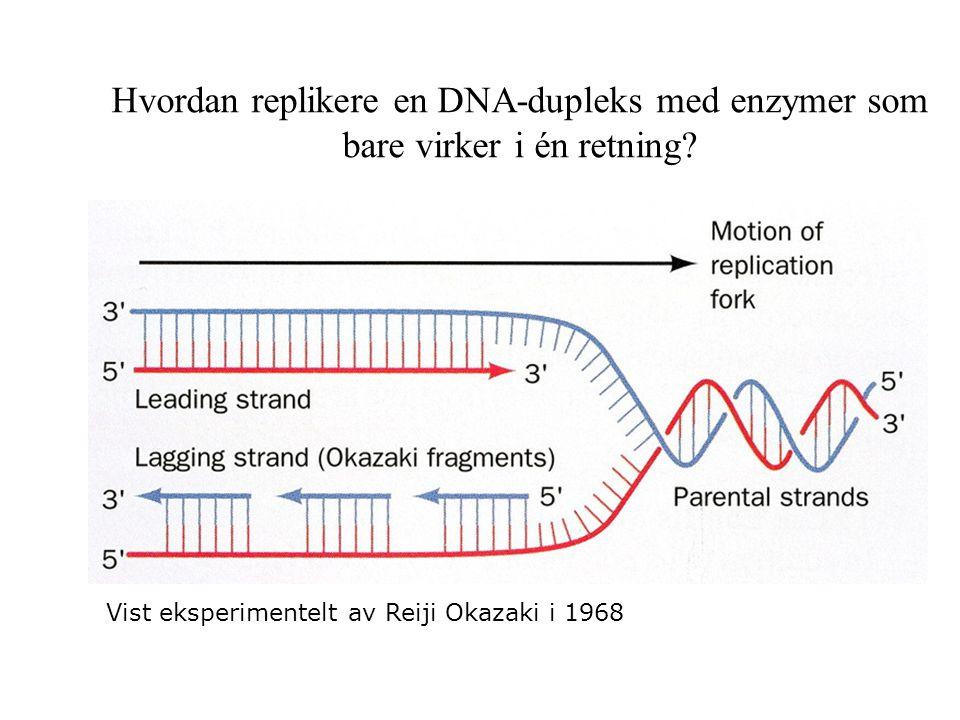 Hvordan replikere en DNA-dupleks med enzymer som bare virker i én retning