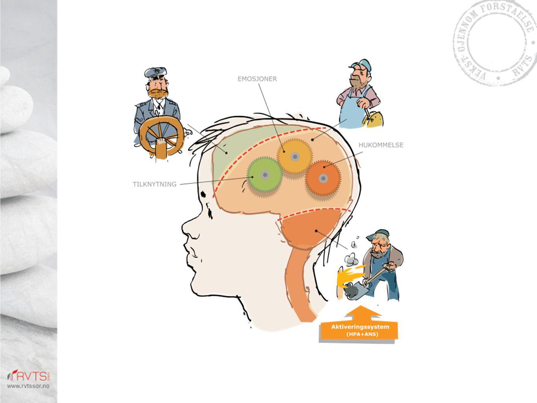 Den tredelte hjernen: Tenke-hjernen – kapteinen, følehjernen – maskinisten, aktiveringssystemet - fyrbøteren.