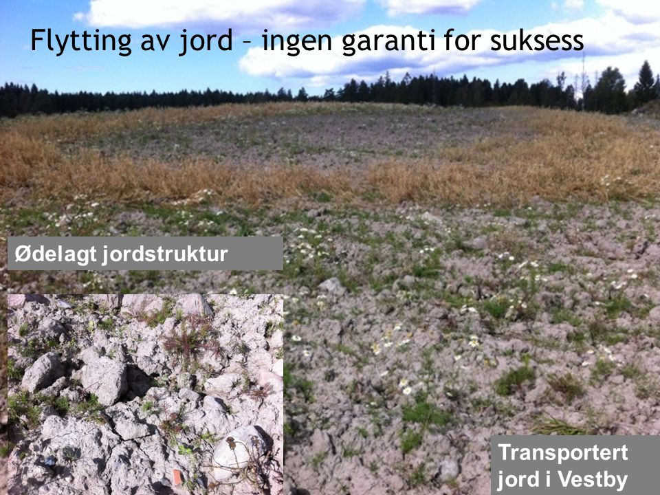 Flytting av jord – ingen garanti for suksess