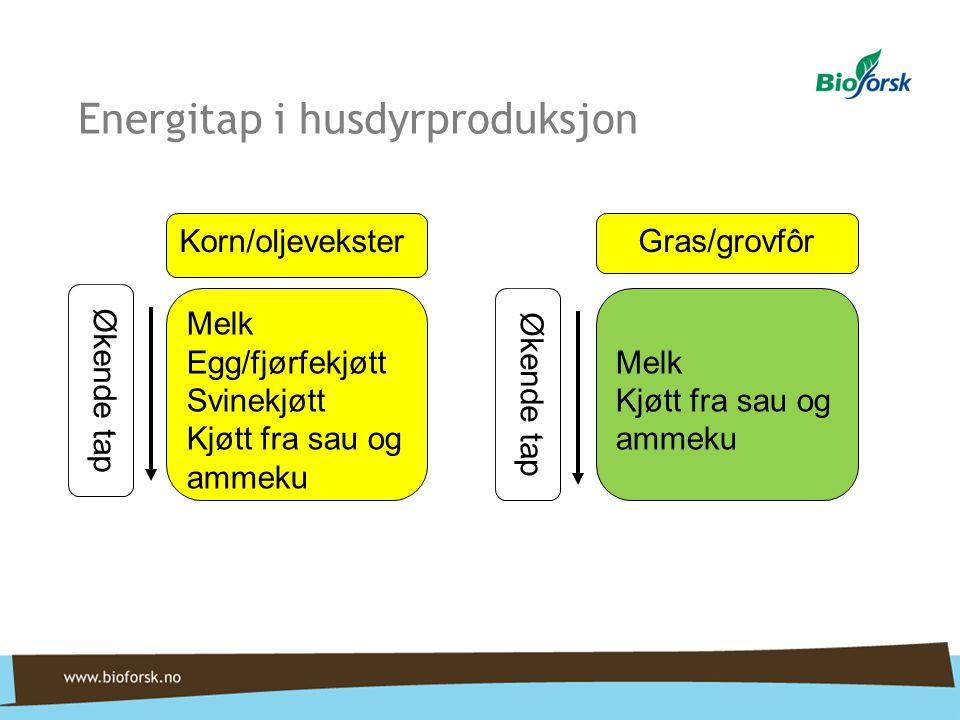 Energitap i husdyrproduksjon