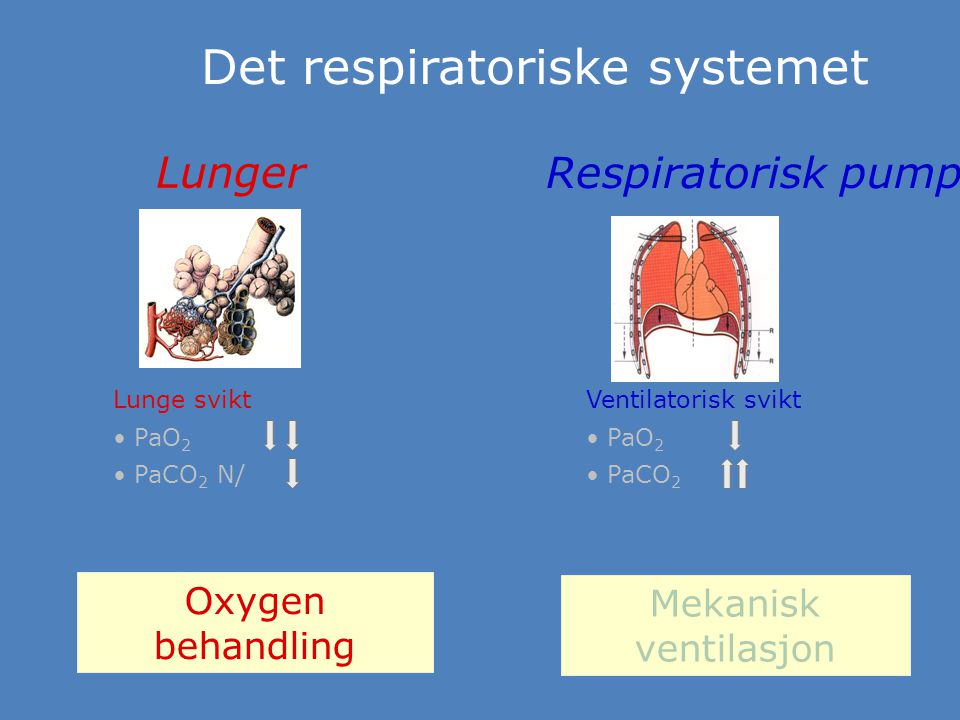 Det respiratoriske systemet