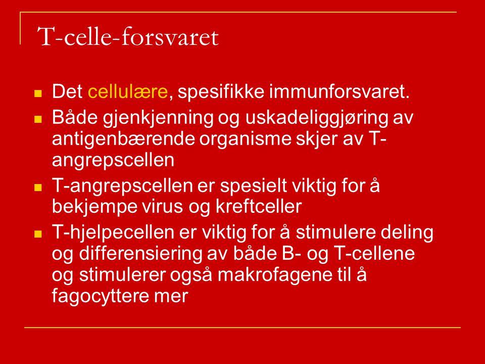 T-celle-forsvaret Det cellulære, spesifikke immunforsvaret.