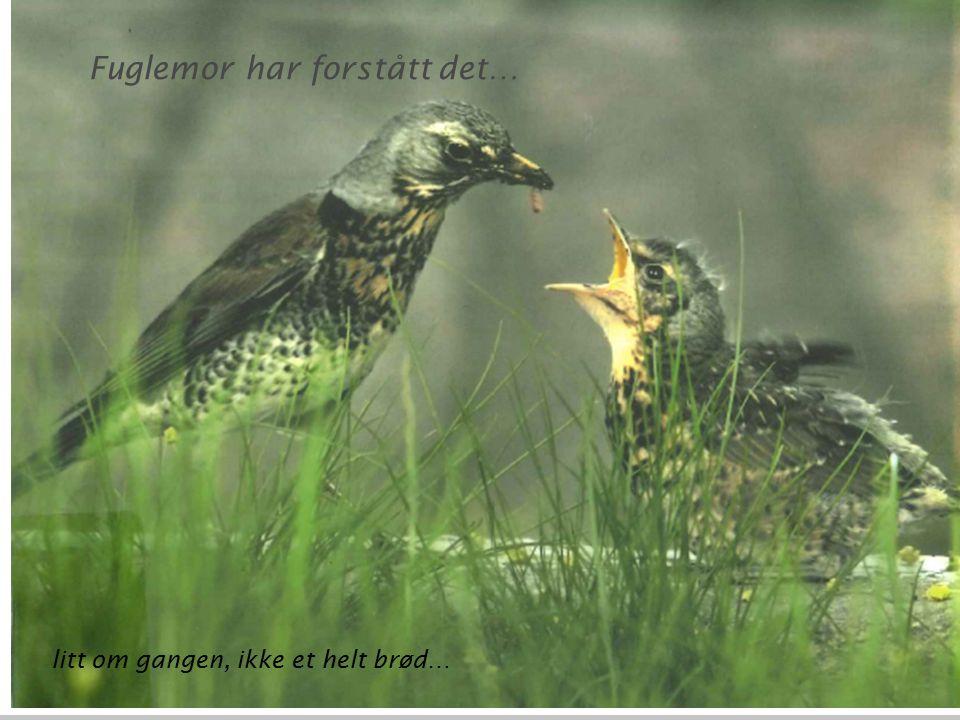 Fuglemor har forstått det…