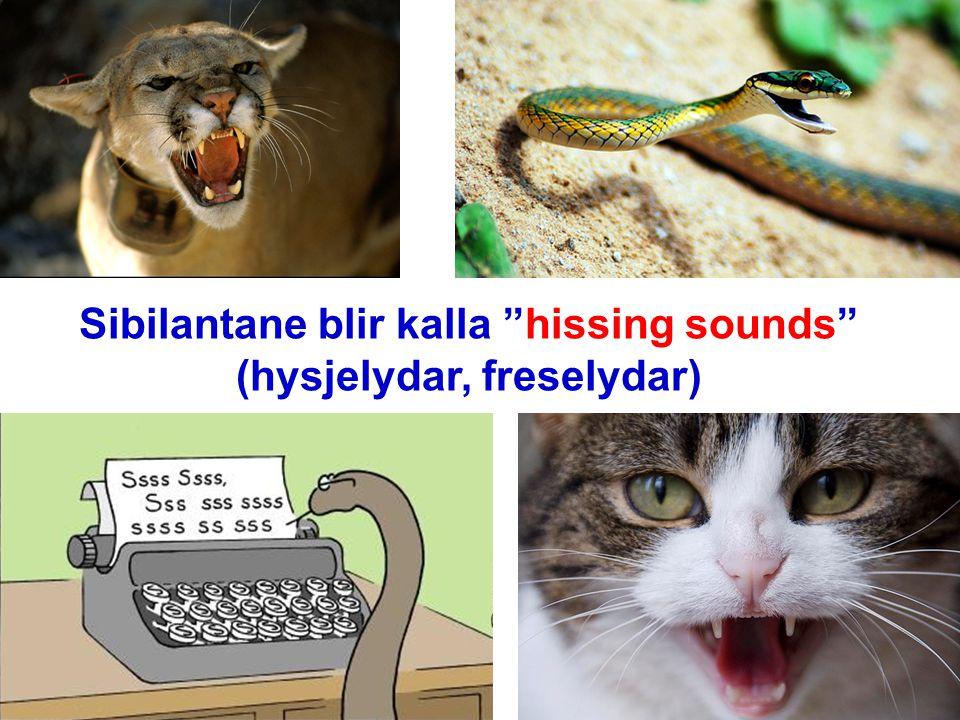 Sibilantane blir kalla hissing sounds (hysjelydar, freselydar)