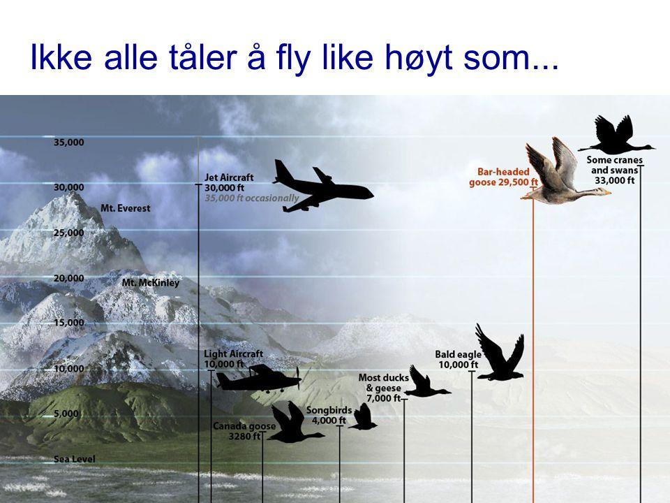 Ikke alle tåler å fly like høyt som...