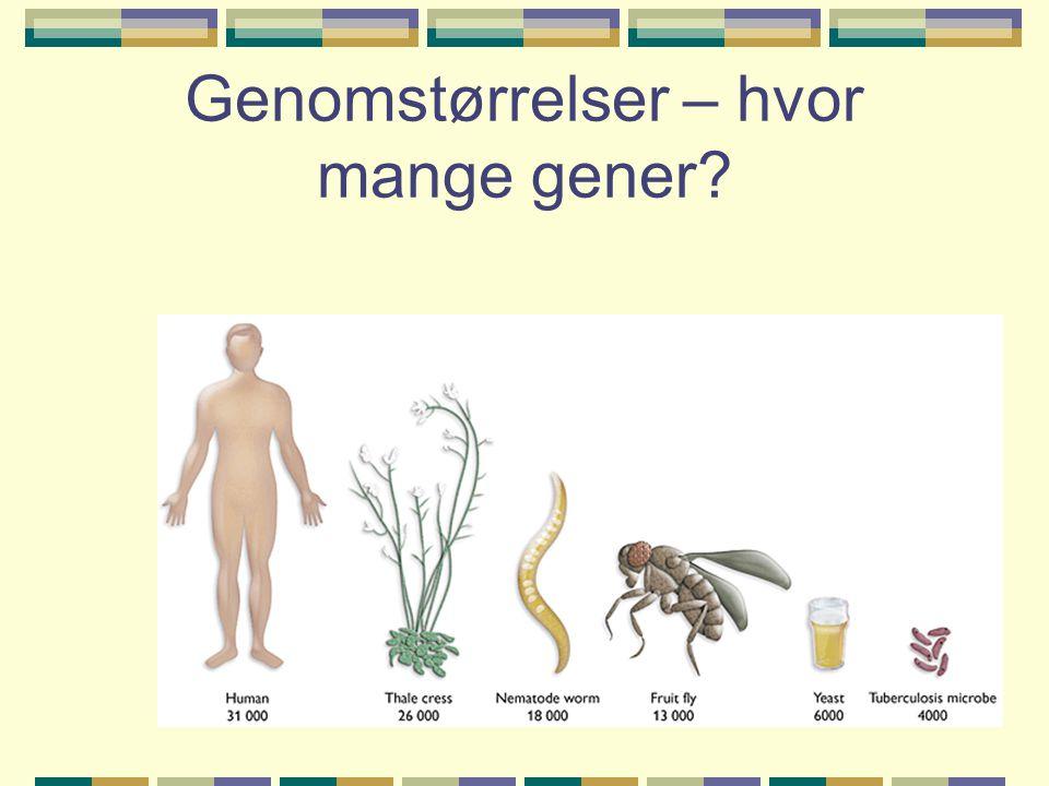 Genomstørrelser – hvor mange gener