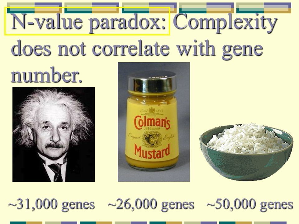 N-value paradox: Complexity does not correlate with gene number.
